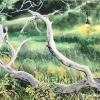 ©Cynthia K. Reid - Fallen Branch